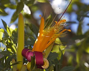 Une flore répertoriée